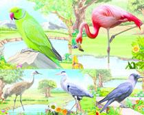 鹦鹉仙鹤绘画摄影时时彩娱乐网站