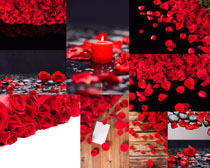 红玫瑰与蜡烛摄影高清图片