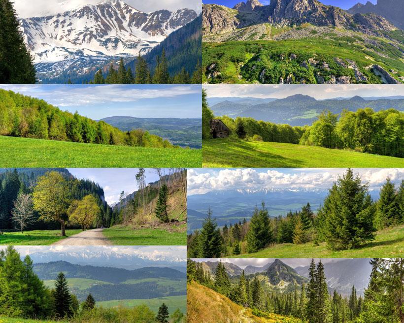 美丽的森林风景拍摄高清图片
