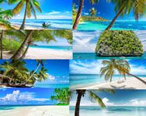 沙滩海边椰树摄影高清图片
