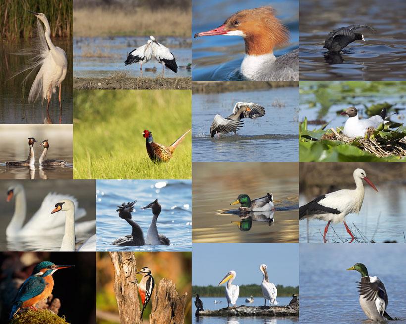 湖泊鸟类摄影高清图片