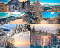 树木雪天景观拍摄高清图片