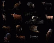 黑暗动物拍摄时时彩娱乐网站
