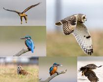 动物鸟类摄影时时彩娱乐网站