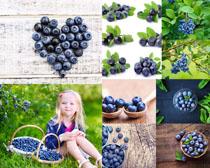 蓝莓水果摄影高清图片