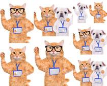 工作牌与猫咪摄影高清图片