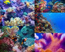 海底漂亮的鱼拍摄高清图片