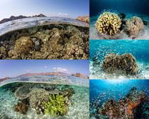海底珊瑚摄影高清图片