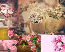 小清新花朵摄影高清图片