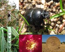昆虫与风景摄影高清图片