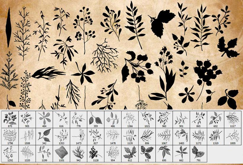 水彩植物叶子PS笔刷