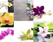 漂亮花朵与石子摄影高清图片