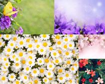 美丽花朵背景拍摄高清图片