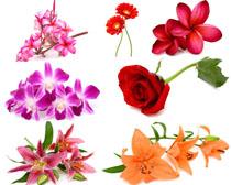 兰花玫瑰向日葵花朵摄影高清图片