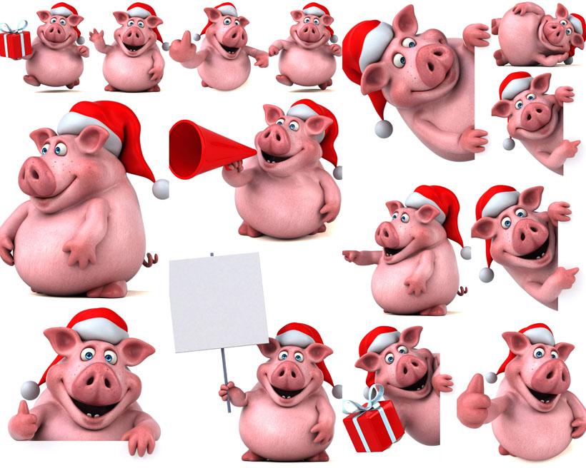可爱猪猪拍摄高清图片