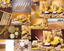 粉条与五谷杂粮摄影高清图片