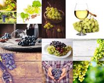 新鲜葡萄酒水摄影高清图片