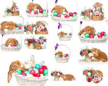 小兔子与花朵摄影高清图片