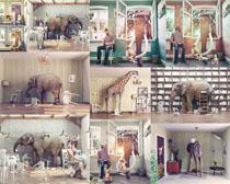 大象长颈鹿与人物摄影高清图片