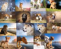 外国宠物狗摄影时时彩娱乐网站