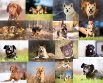 宠物狗狗动物摄影时时彩娱乐网站
