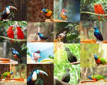 各种鸟类摄影时时彩娱乐网站