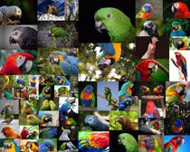 漂亮的鹦鹉拍摄时时彩娱乐网站