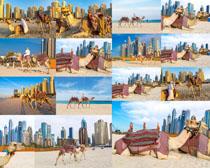城市沙滩上的骆驼摄影高清图片