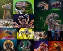 昆虫高清摄影高清图片