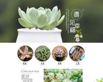 淘宝多肉植物首页装修设计PSD模板