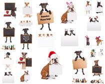 可爱狗狗与广告牌摄影高清图片