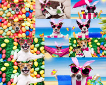 可爱狗狗与彩蛋摄影高清图片