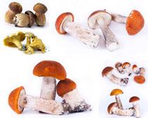 种类蘑菇摄影高清图片