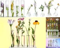 美丽的插画花朵摄影高清图片