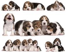 可爱小狗写真拍摄高清图片
