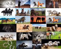 奔跑的马动物拍摄高清图片