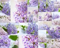 漂亮的小花朵拍摄高清图片