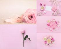 玫瑰花朵与戒指摄影高清图片