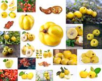 国外水果展示拍摄高清图片