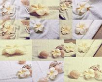 毛巾上的贝壳摄影高清图片