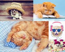 可爱猫咪拍摄写真高清图片