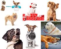聪明的狗狗拍摄高清图片