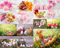 色彩鸡蛋花草摄影高清图片