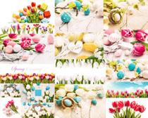 漂亮的花朵与蛋摄影高清图片