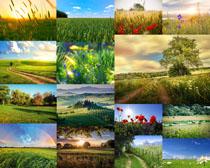 田园花草风景摄影高清图片
