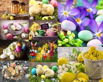 彩蛋花朵小鸡摄影高清图片