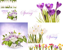 水仙与花朵摄影高清图片