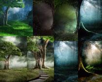 森林风景拍摄高清图片