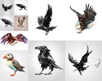 绘画鸟类摄影高清图片