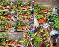 盆栽花朵工具摄影高清图片